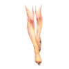 https://www.eldarya.pl/assets/img/item/player//icon/1adaea131ca563ee33d4acfb90e4ca91~1544025600.png