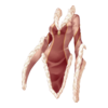 https://www.eldarya.pl/assets/img/item/player//icon/ac860e4892fc9ac3eeaad9ad2e391a34~1450271221.png