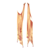 https://www.eldarya.pl/assets/img/item/player/icon/00e8b2a0fd3d70e5f68fcc70469f21c6.png