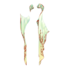 http://eldarya.pl/static/img/item/player//icon/5a3032b319cab9918ce2b08c65e22e62~1496761694.png