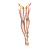 https://www.eldarya.pl/assets/img/item/player/icon/b31e0ffb628c45bfb717a0c6a7656caf~1513001621.png